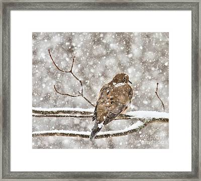 Framed Print featuring the photograph Peaceful by Debbie Stahre