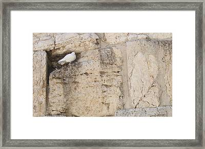 Framed Print featuring the photograph Peaceful Dove by Julie Alison