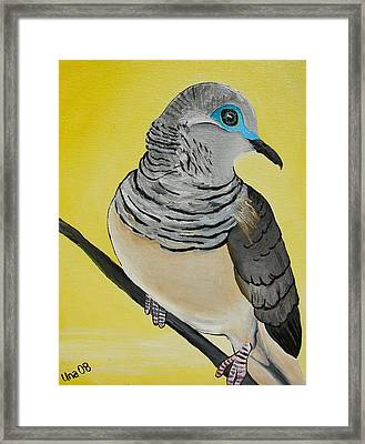 Peaceful Dove  Framed Print by Una  Miller