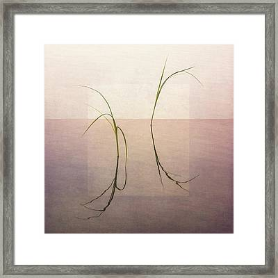 Peaceful Evening Framed Print