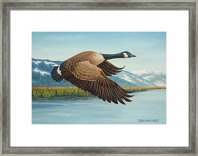 Peaceful Flight Framed Print