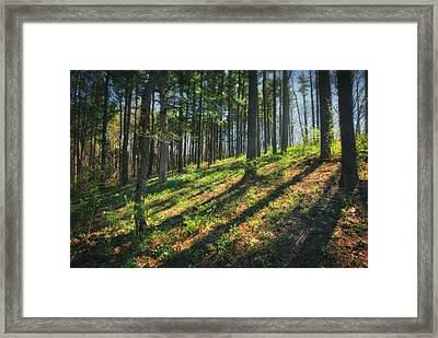 Peaceful Forest 4 - Spring At Retzer Nature Center Framed Print by Jennifer Rondinelli Reilly - Fine Art Photography