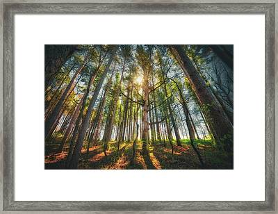 Peaceful Forest 5 - Spring At Retzer Nature Center Framed Print by Jennifer Rondinelli Reilly - Fine Art Photography