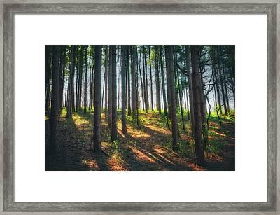 Peaceful Forest - Spring At Retzer Nature Center Framed Print