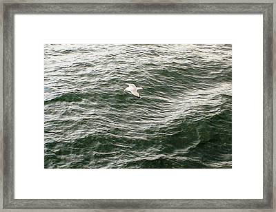 Peaceful Gliding At Sea Framed Print by Piety Dsilva
