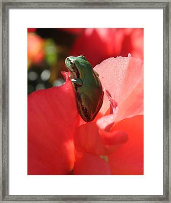 Peaceful Morning Framed Print by Tracey Levine