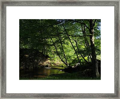 Framed Print featuring the photograph Peaceful Mountain Stream by Diannah Lynch