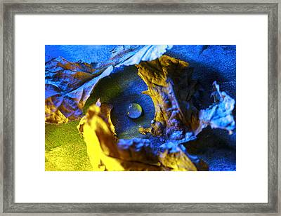 Peaceful Nest  Framed Print