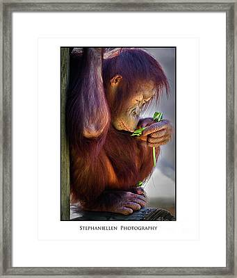 Peaceful Orangutan Framed Print