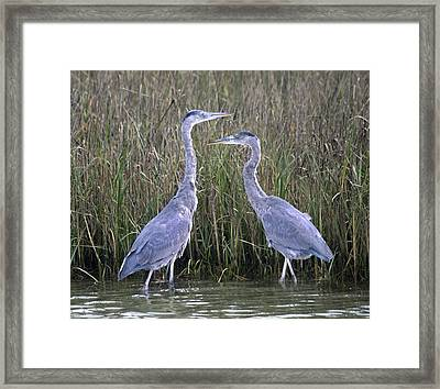 Peaceful Pair Framed Print