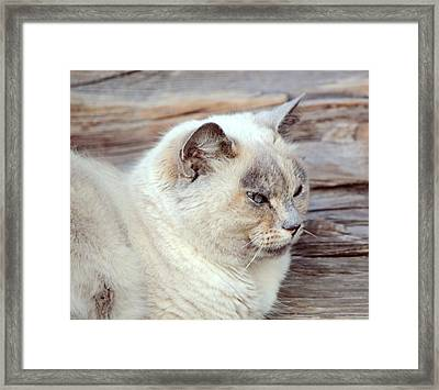 Peaceful Ragdoll Cat Framed Print by Elenarts - Elena Duvernay photo