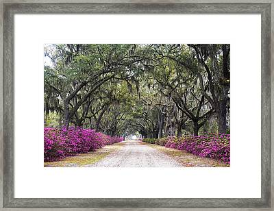 Peaceful Resting Place Framed Print