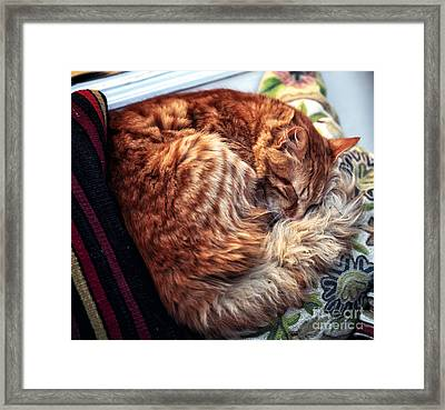 Peaceful Sleep Framed Print by John Rizzuto