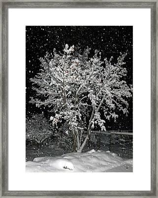 Peaceful Snowfall Framed Print