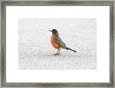 Peaceful Solitude Framed Print