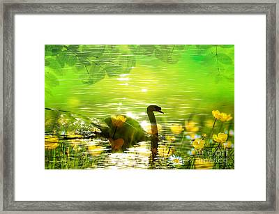 Peaceful Swan In Lake With Flowers Framed Print