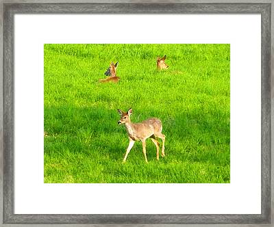Peaceful Togetherness Framed Print