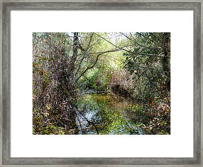 Peaceful Water 2 Framed Print by Pamela Patch