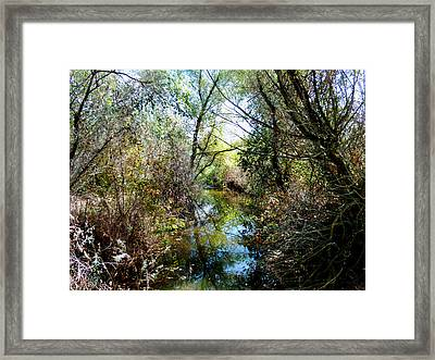 Peaceful Water Framed Print by Pamela Patch