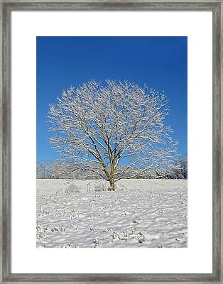 Peaceful Winter Framed Print by Susan Leggett
