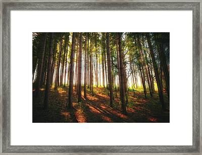Peaceful Wisconsin Forest 2 - Spring At Retzer Nature Center Framed Print