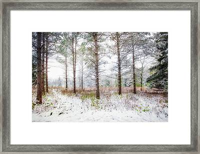 Peaceful Woods - Winter At Retzer Nature Center  Framed Print by Jennifer Rondinelli Reilly - Fine Art Photography