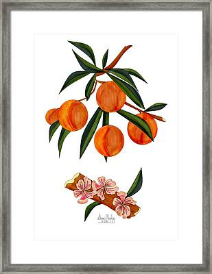 Peach And Peach Blossoms Framed Print by Anne Norskog