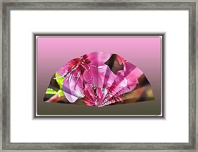 Peach Blossom Fan Framed Print by Thomas Fields