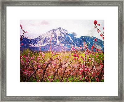 Peach Blossoms And Mount Lamborn II Framed Print by Anastasia Savage Ealy