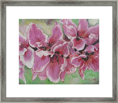 Peach Blossoms Framed Print