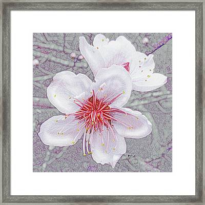 Framed Print featuring the digital art Peach Blossoms by Jane Schnetlage