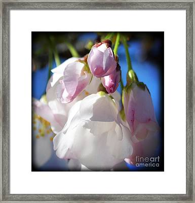 Peach Blossoms Upclose And Personal Framed Print by Eva Thomas