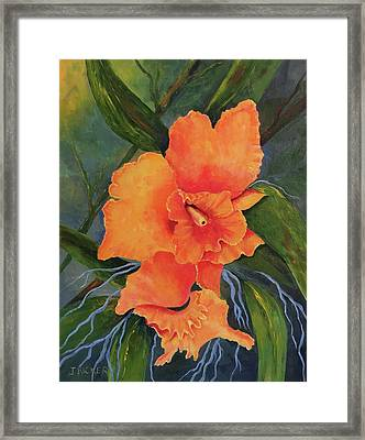 Peach  Blush Orchid Framed Print