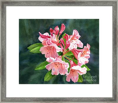Peach Colored Rhododendron Flowers Dark Background Framed Print by Sharon Freeman