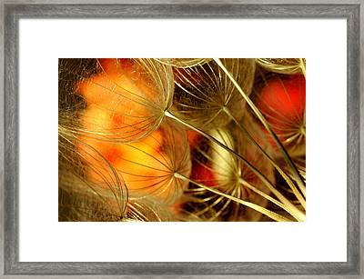 Peach Dandelions Framed Print by Iris Greenwell
