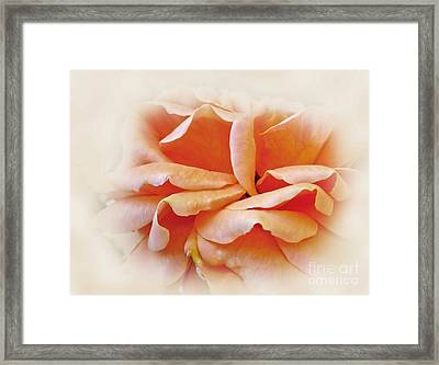 Peach Delight Framed Print