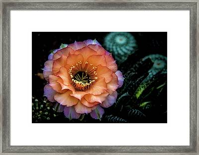 Framed Print featuring the photograph Peach Desert Glow Bloom by Julie Palencia