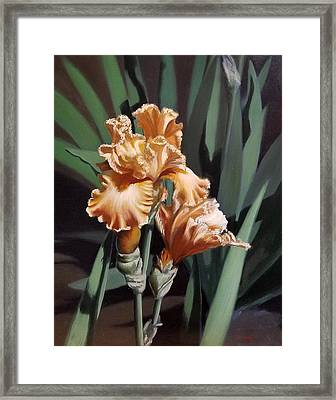 Peach Iris Framed Print