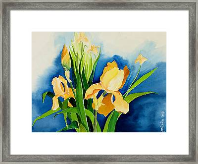 Peach Irises Framed Print by Janis Grau