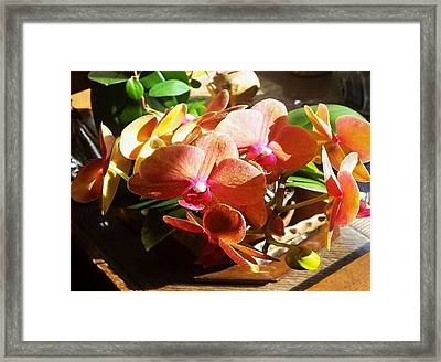 Framed Print featuring the photograph Peach Orchid Blossoms by Deb Martin-Webster