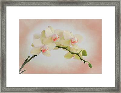 Peach Orchid Spray Framed Print