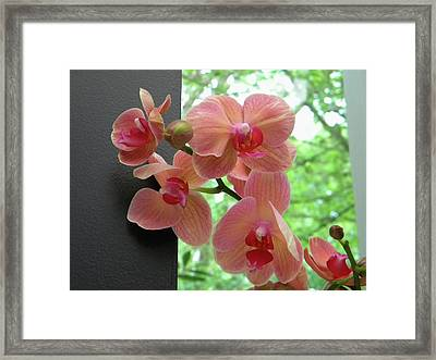 Framed Print featuring the photograph Peach Orchids by Manuela Constantin