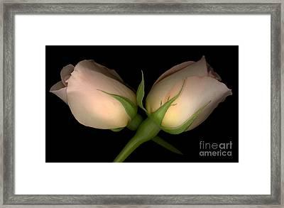 Peach Rose Criss Cross Horizontal Framed Print