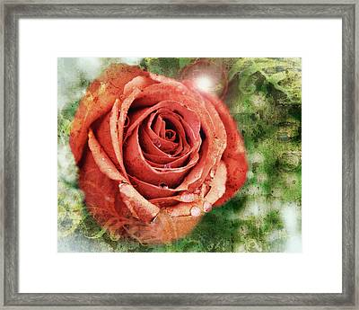 Peach Rose Framed Print by Sennie Pierson