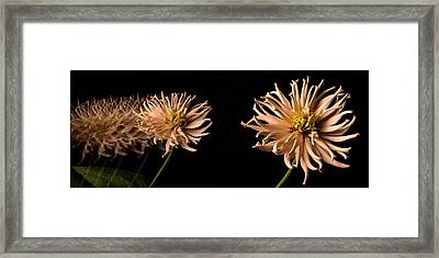 Peach Zinnia Diptych Framed Print by Don Spenner
