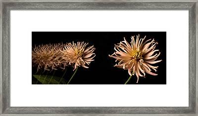 Peach Zinnia Diptych Framed Print by Don Spenner