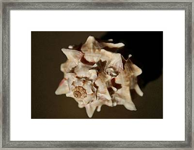 Peaches And Cream Framed Print by Mary Haber