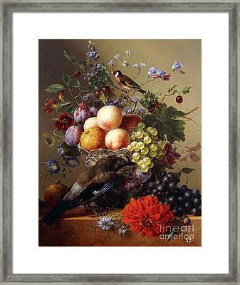 Peaches, Grapes, Plums And Flowers In A Glass Vase With A Jay On A Ledge Framed Print by Arnoldus Bloemers
