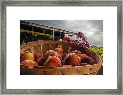 Peaches Framed Print by Maria Coulson