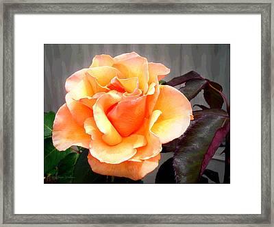 Peaches N' Cream Framed Print by Joyce Dickens